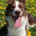 Nieuwe regels over honden